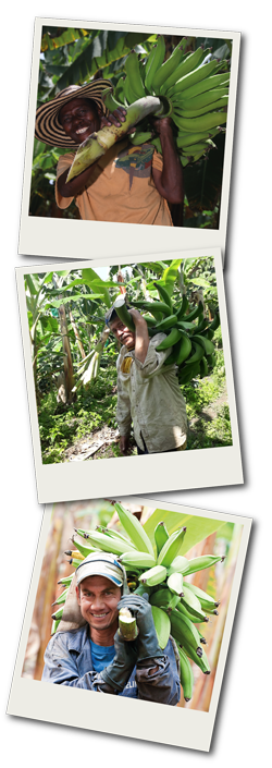 Our Plantain Farmers-04